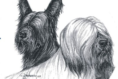 The Skye Terrier Club